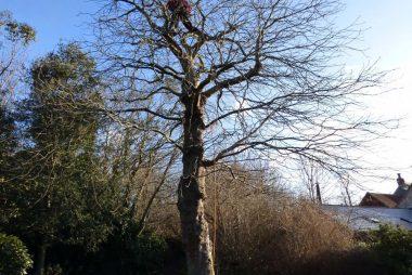 Tree Surgeons in Wiltshire