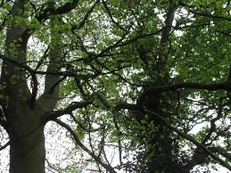 Tree Surgeons in Wiltshire