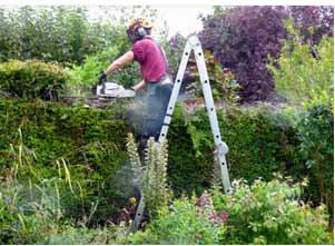 Hedge Cutting and Maintenance Service