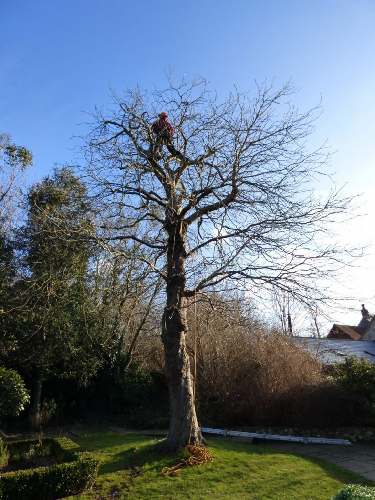 Avon Tree and Garden Services provide a tree surgeon services throughout Wiltshire